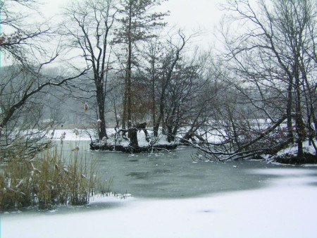 Brooklyn in Winter