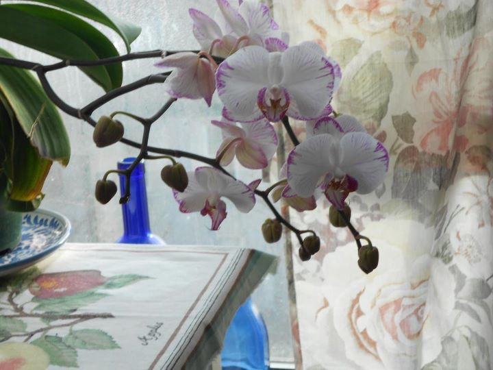 Orchids, Brooklyn, every February, this year most ever